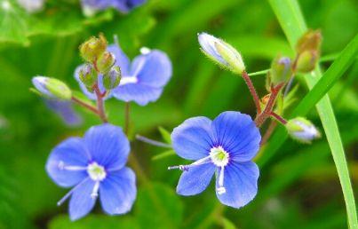 ambiente fiori natura