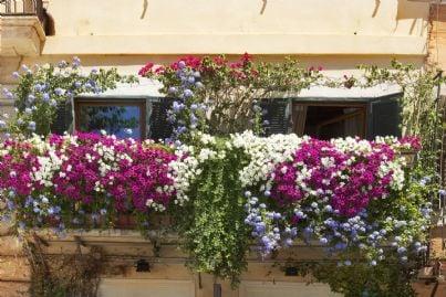 terrazzo in condominio arredato con fiori