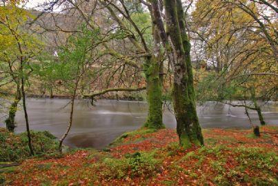 fiume alluvioine natura autunno