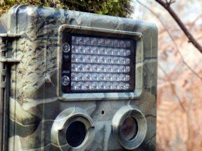 fototrappola legata ad un albero