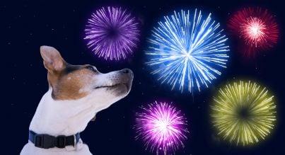 cane che ha paura dei fuochi di artificio