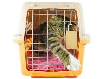 gatto cerca di scappare da trasportino