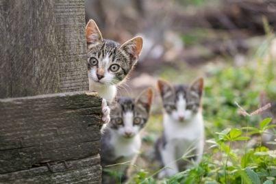 tre gatti curiosi in cortile