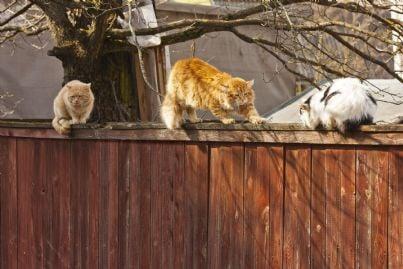 gatti randagi siedono su un recinto condominiale