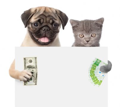 gatto e cane che mostrano cartello con soldi