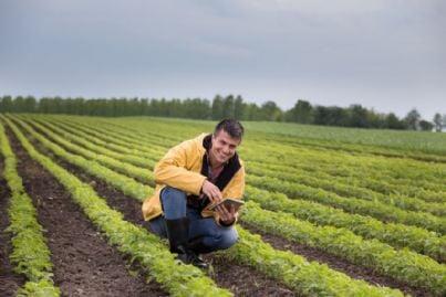 giovane imprenditore agricolo sui campi