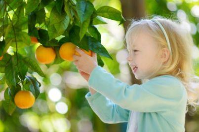 Bambina intenta a raccogliere un frutto