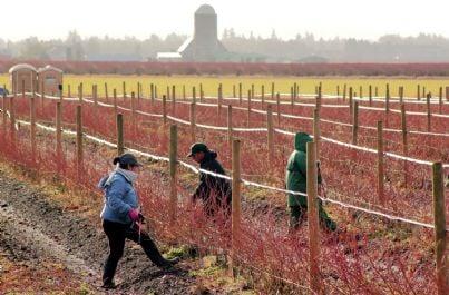 lavoratori agricoli nei campi