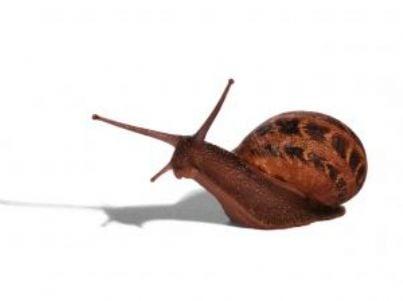 lumaca id9520