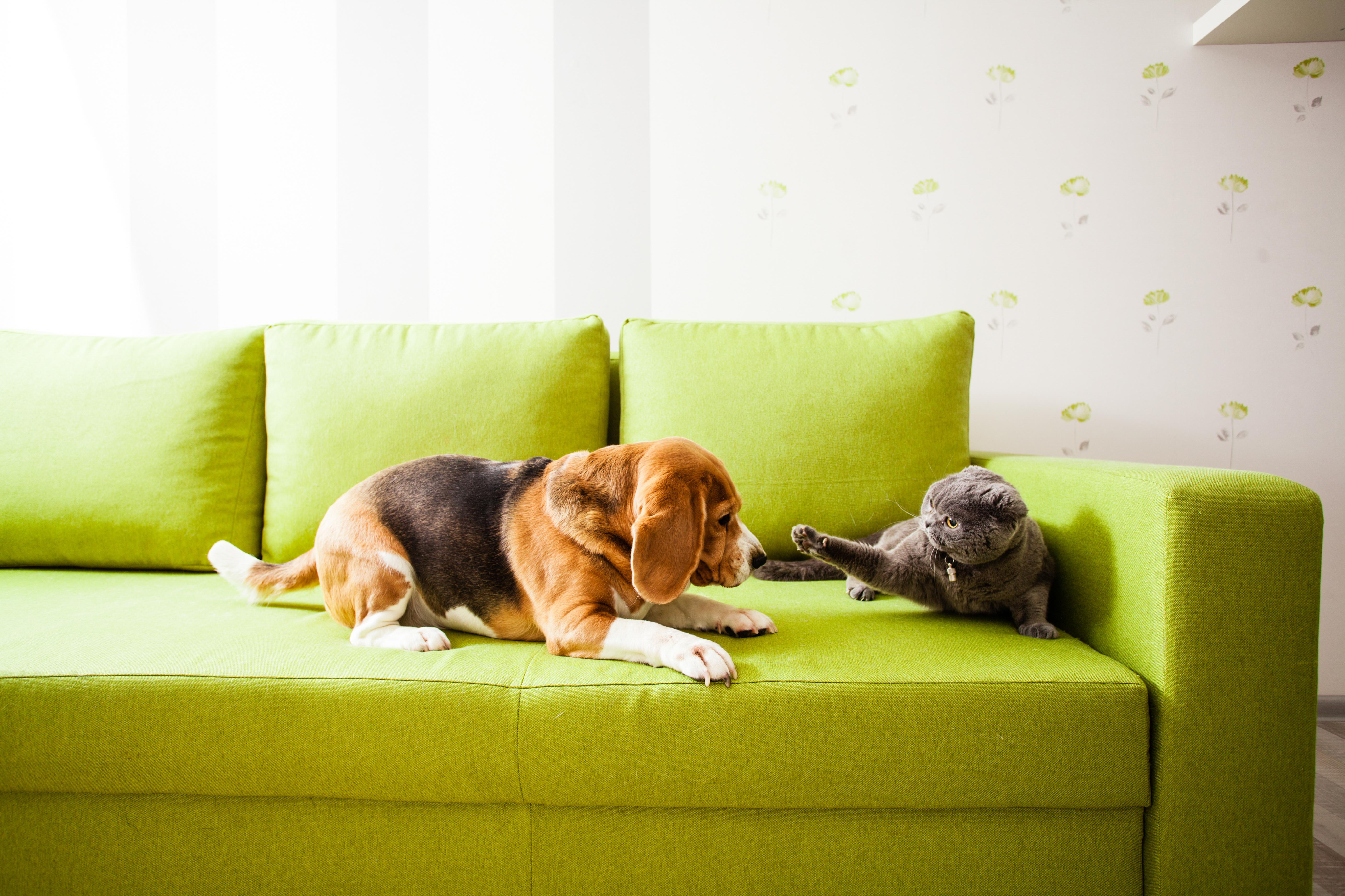 Rete Per Gatti Condominio condominio: quanti animali domestici è possibile tenere in
