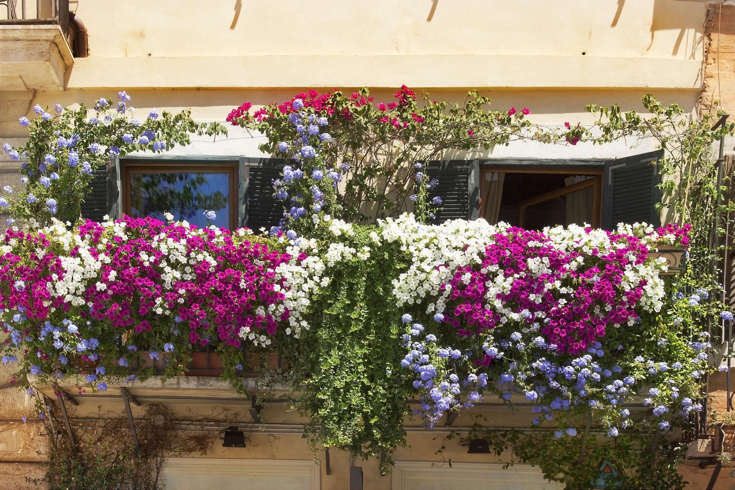 Condominio via i fiori se il regolamento li vieta for Fiori da terrazzo