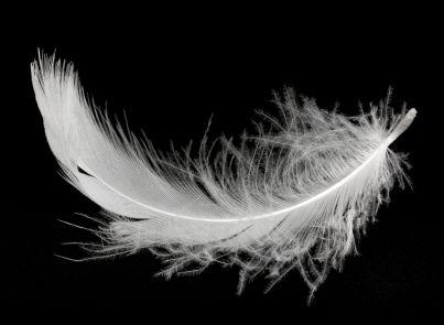 una piuma bianca su sfondo nero