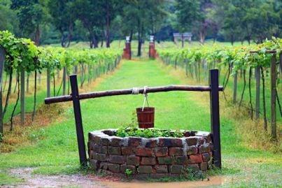 pozzo in mezzo a filari di vite in campagna