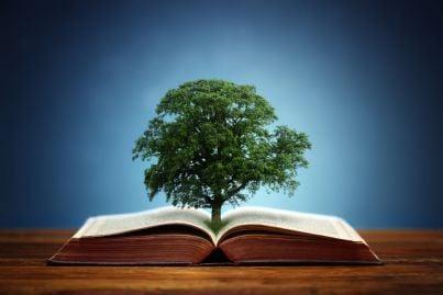 una quercia su un libro aperto