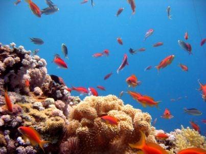 subaqueo pesci id11685