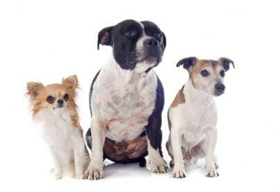 cane animali