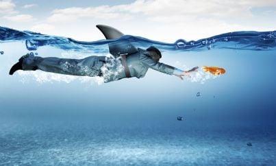 uomo di affari con schiena da squalo