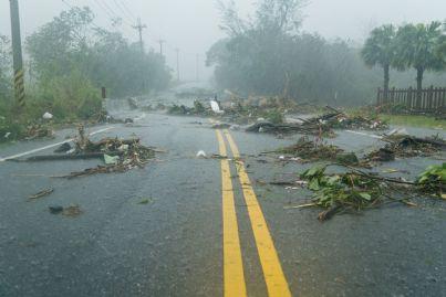 rami sulla strada caduti per colpa del vento
